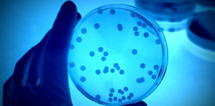 Mikrobiologische Grundlagen der PA-Therapie