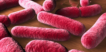 Lactobacillus reuteri gegen Keime in der Mundhöhle