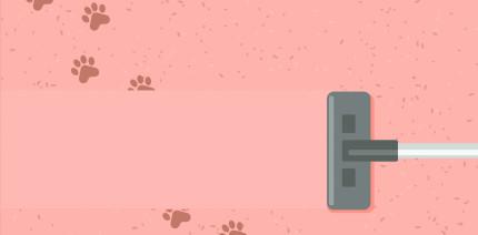 Hui oder Pfui? Hunde in der Arztpraxis – das sagt der Experte