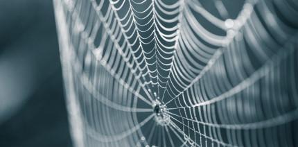 Biomaterial aus Spinnenseide: Zauberformel gegen Biofilme
