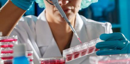 Regenerative Endodontie: Wie wirksam sind Stammzellen wirklich?