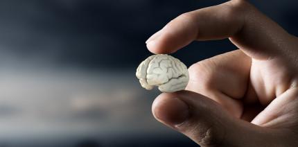 Studie: Fluorid nagt an menschlicher Intelligenz
