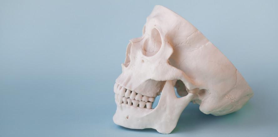 Forschungsprojekt gestartet: Neue Knochen im Körper züchten