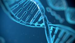Karies: Forscher entschlüsseln weitere Bakterienart