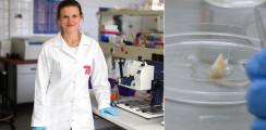 Forscher arbeiten an nachwachsenden Zähnen