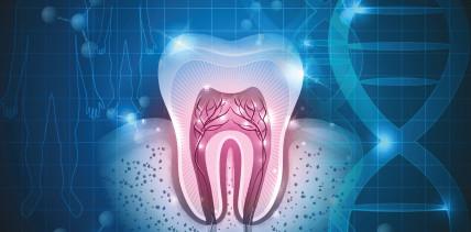 Haben Forscher das Rätsel der Zahnregeneration gelöst?
