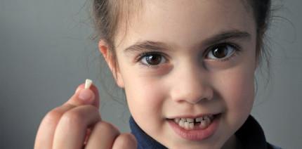 Stammzellen aus Milchzähnen retten bleibende Zähne