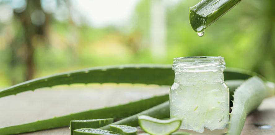 Wundermittel Aloe vera: Wirksamer als Chlorhexidin?