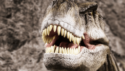 Bohren an T.rex-Zähnen - Forscher wollen Dino-Nahrung erkunden