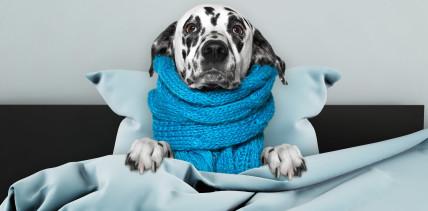 Der Hund ist krank: Dürfen Arbeitnehmer zu Hause bleiben?