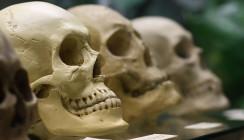 Zähne der wohl frühesten Verwandten des Menschen entdeckt
