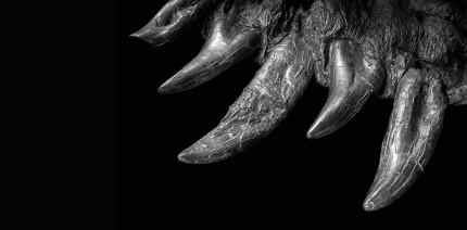 Forschungsergebnisse: Wie wuchsen T. rex die Zähne nach?