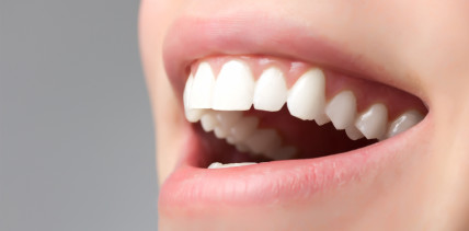 Wechselwirkung von Bakterien & Immunzellen im Zahnfleisch