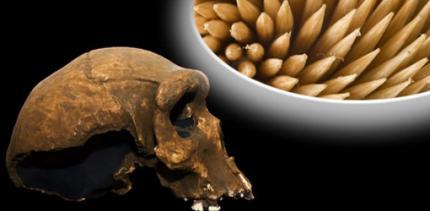 Schon der Neandertaler nutzte Zahnstocher