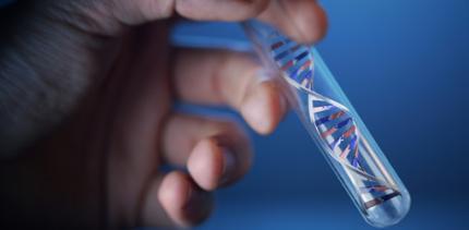 Gen bringt Zähne in Form
