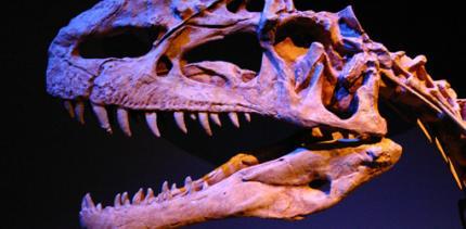 Sonderausstellung Zähne – Hieb- und Bissfestes aus der Entwicklungsgeschichte