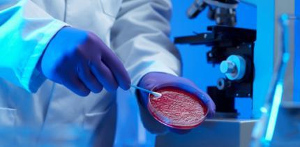 Kampf im Kollektiv: Wie Zellen Bakterien austricksen
