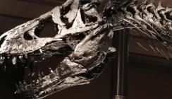 Dino mit Zahnweh