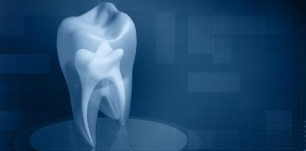 Zähne sagen menschliche Evolution voraus