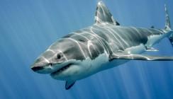 Zahnarzt leitet nach Hai-Attacke seine eigene Gesichts-OP