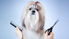 Hundehaare als Streitpunkt in Zahnarztpraxis