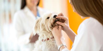 So klappts auch wieder mit dem Beißen – Zahnspangen für Hunde