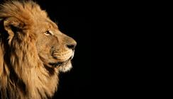 Löwe tot – Praxis zu: Zahnarzt beugt sich dem Shitstorm