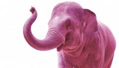 Rosa Elefant verwüstet Zahnarztpraxis