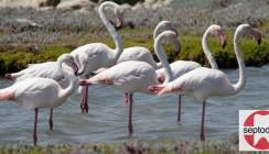 Septodont Roadshow: Warum stehen Flamingos auf einem Bein?