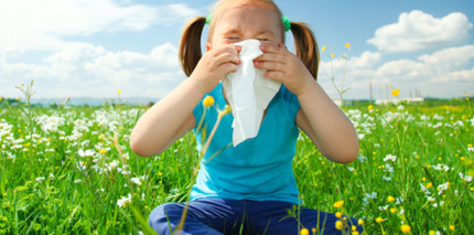 Forscher einen Schritt weiter im Kampf gegen Allergien