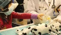 Teddybären-Spital nimmt Kindern die Angst vor dem Arztbesuch