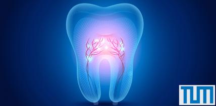Neues Röntgenverfahren: Details aus dem Inneren eines Zahns