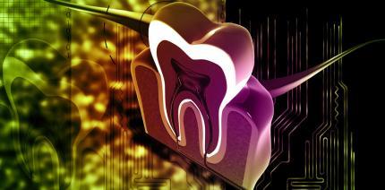 Milchzähne – die biologischen Festplatten unseres Körpers