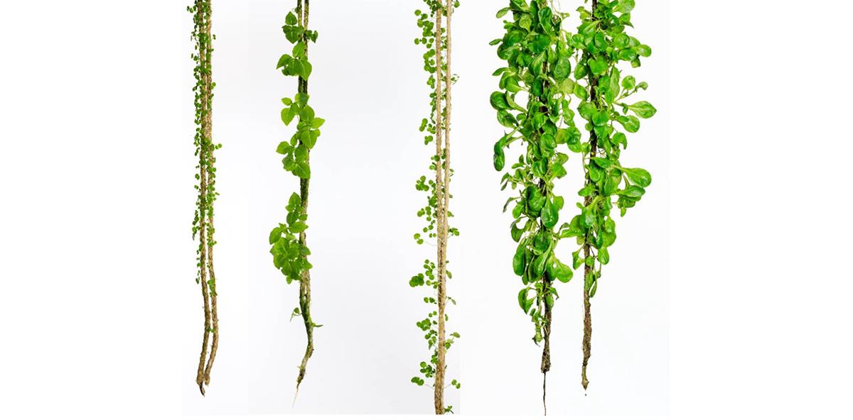 Garten mal anders – The Boho Project
