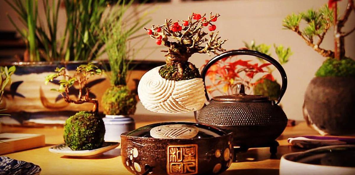 It's magic: Der schwebende Bonsai