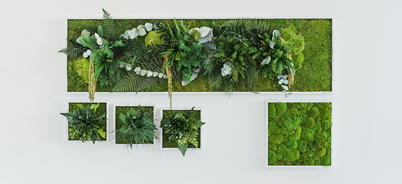styleGreen Pflanzenbilder