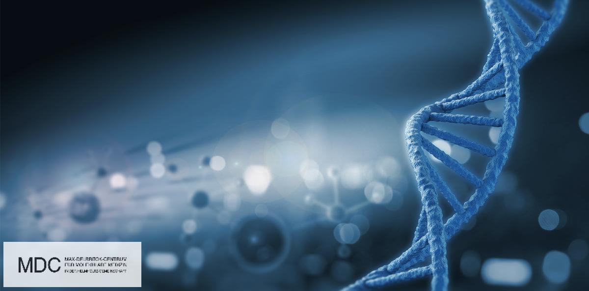 Genetische Ursache für Gaumenspalte geklärt