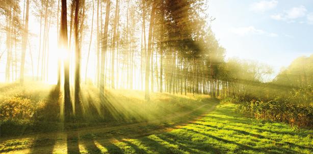 Die Natur des Lichts – kurz und bündig