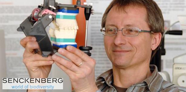 Neandertaler: Spuren im Zahnschmelz widerlegen artspezifische Ernährung