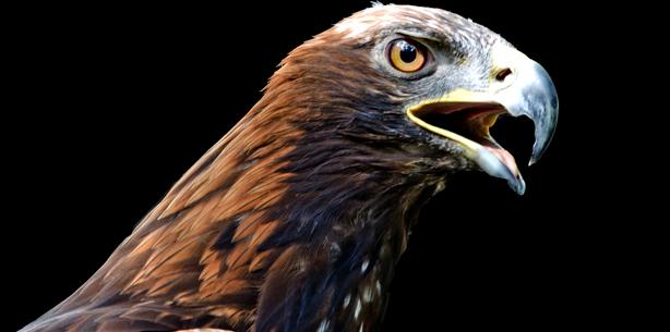 Wie die Vögel ihre Zähne verloren